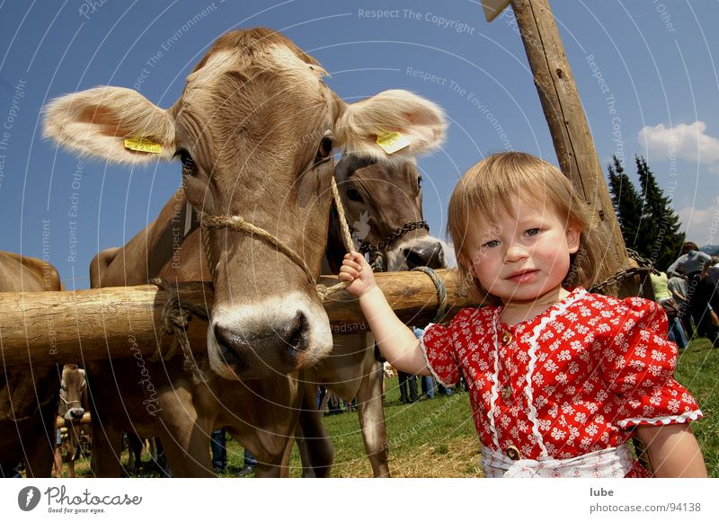 Girl Child Agriculture Farmer Cow Calf Cattle Livestock breeding