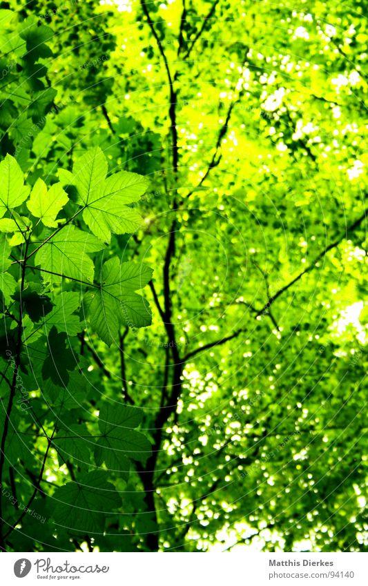 Green Beautiful Summer Sun Tree Leaf Dark Forest Lighting Lanes & trails Freedom Above Bright Rain Air Wild animal
