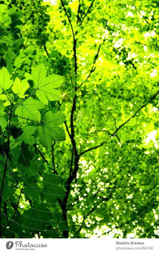 Green Beautiful Summer Sun Tree Leaf Dark Forest Lighting Lanes & trails Freedom Above Bright Rain Air Wild animal