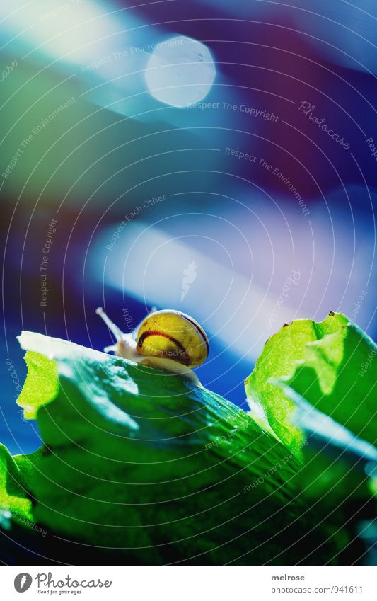 up and away Nature Sun Sunlight Autumn Beautiful weather Leaf Agricultural crop Salad leaf Garden Park Meadow Snail shell Animal Mollusk 1 bokeh Movement Blue