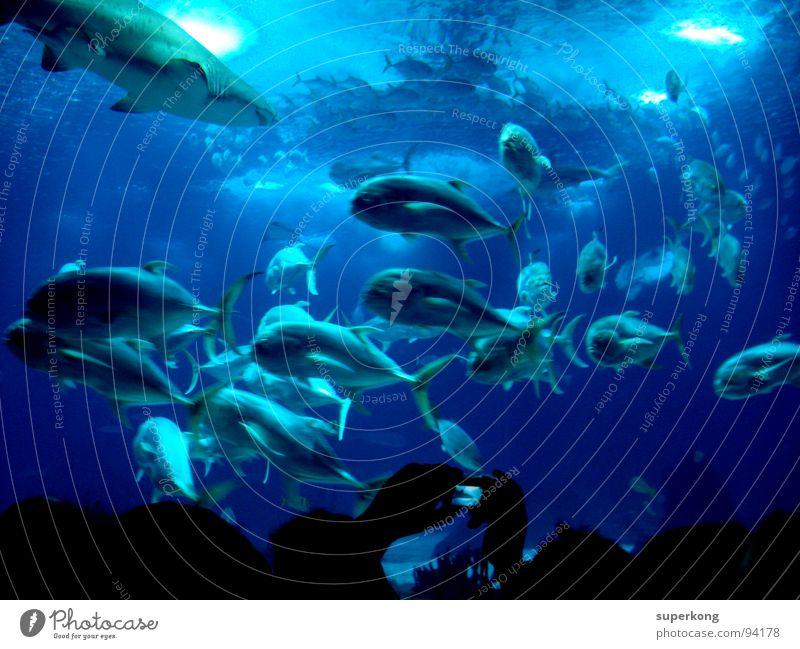 Nature Water Ocean Blue Summer Cold Emotions Freedom Warmth Wet Fish Physics Joie de vivre (Vitality) Escape Aquarium