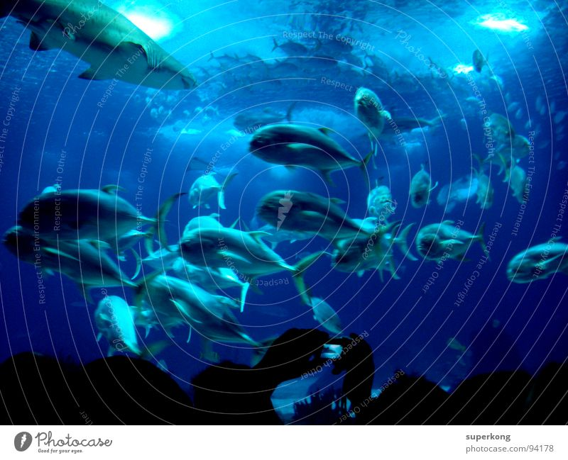 Nature Water Ocean Blue Summer Cold Emotions Freedom Warmth Wet Fish Physics Joie de vivre (Vitality) Escape Aquarium