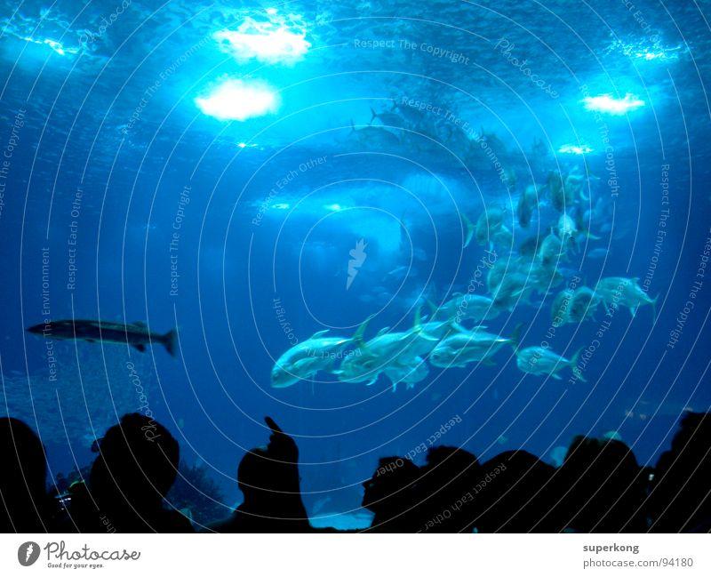 Nature Water Ocean Blue Summer Cold Emotions Freedom Warmth Wet Fish Restaurant Physics Joie de vivre (Vitality) Escape