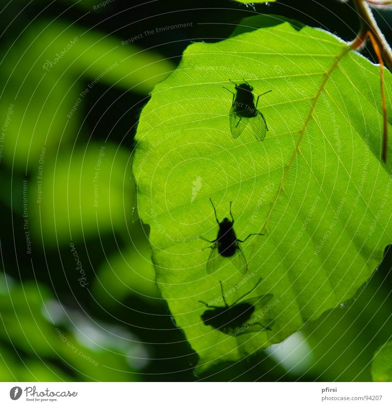 Shadow Flies Leaf Tree Green Worm's-eye view Under Animal Insect 3 Flying Nature Above