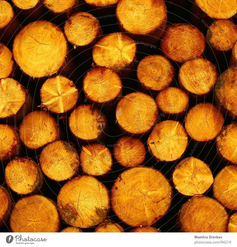 wood Tree Wood Round Yellow Heap Stack Stack of wood Tree trunk Logging Forestry Circle Dry Raw materials and fuels Exterior shot Pattern Nature Spruce