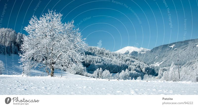 Dream in white and blue Winter Snowscape Panorama (View) Tree Meadow Field Cold Frozen Austria Federal State of Kärnten Peace Landscape Sky Mountain Blue Ice
