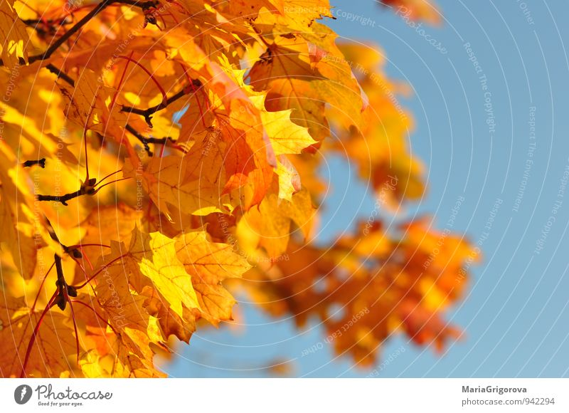 Autumn tree Sky Nature Tree Forest Autumn Park Air Climate Happiness Elements Serene Climate change Determination