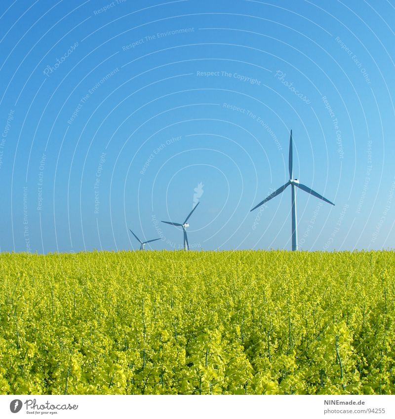 Nature Sky White Flower Green Summer Yellow Blossom Movement Spring Field Wind 3 Energy industry Modern Renewable energy