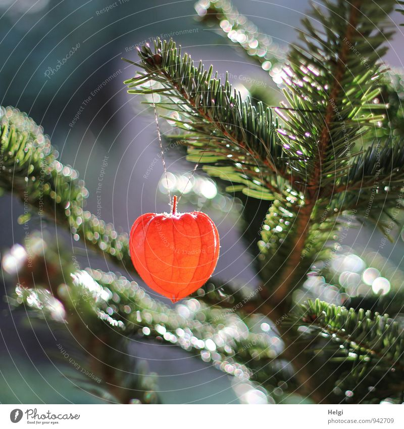 Nature Plant Beautiful Green Christmas & Advent Tree Flower Environment Natural Gray Exceptional Garden Moody Glittering Orange Decoration