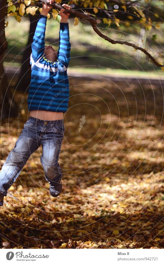 Human being Child Tree Joy Forest Autumn Emotions Boy (child) Playing Moody Park Masculine Leisure and hobbies Infancy Branch Joie de vivre (Vitality)