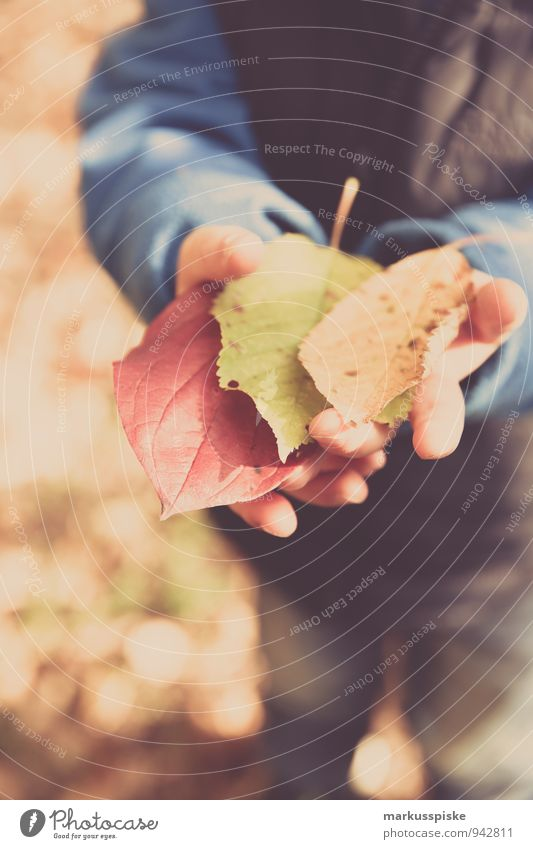 autumn in the kita Joy Happy Leisure and hobbies Playing Parenting Kindergarten Child Kindergarten teacher Forest kindergarten Autumn leaves Autumnal