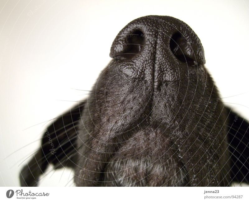 contour Dog Calm Motionless Authentic Living thing Nostril Dog's snout Mammal Nose Ear Detail Snapshot