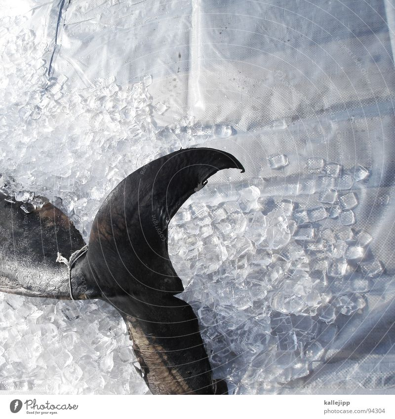 Animal Death Ice Fish Putrefy Living thing Fishery Kill Futile Tail fluke