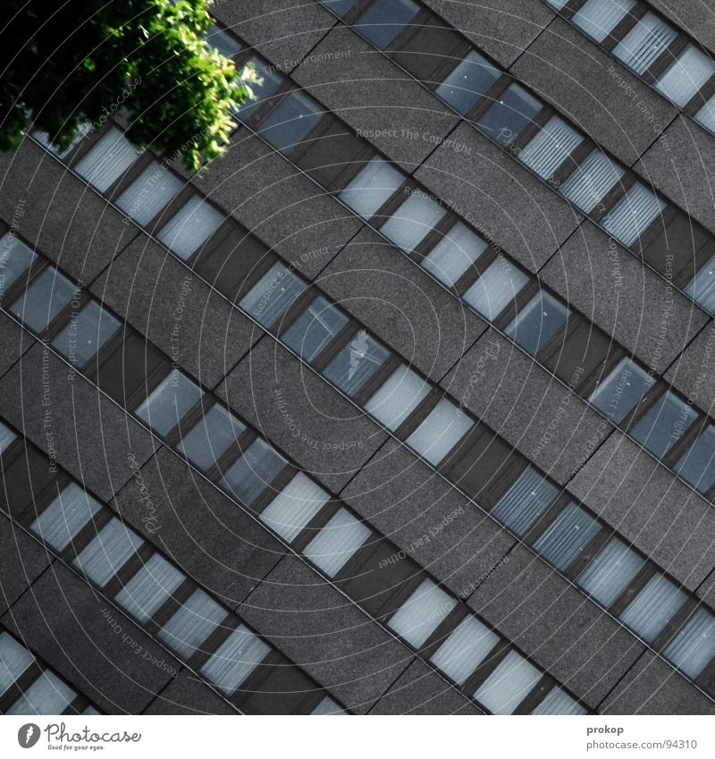 Oasis in B. House (Residential Structure) Window Glazed facade Tree Green Gray Kreuzberg Pattern Building High-rise Gloomy Wall (building) Diagonal Across Leaf