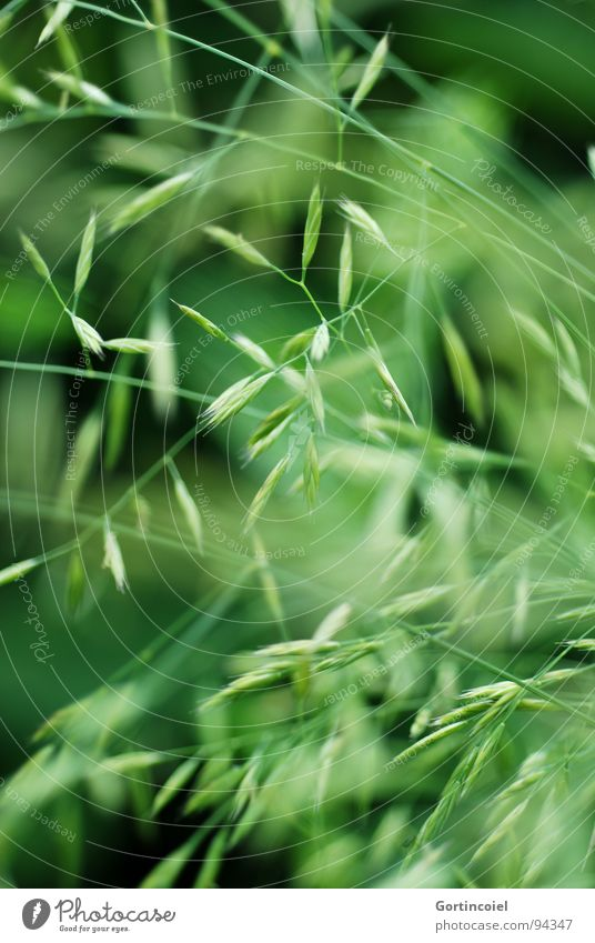 grass chaos Environment Nature Plant Spring Summer Grass Garden Meadow Line Green Chaos Seed Lawn Cross Superimposed Wild Focal point Grass meadow Grass tip