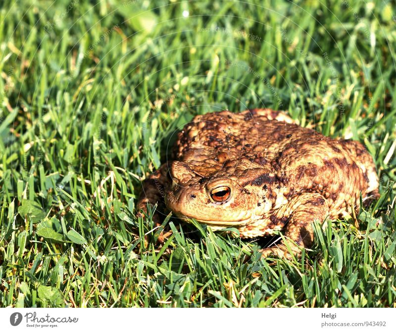 Visit to the garden... Environment Nature Landscape Plant Animal Summer Beautiful weather Grass Foliage plant Garden Wild animal Frog Painted frog Common toad 1