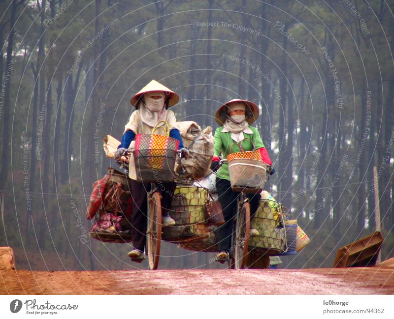 heavy transportation Asia Vietnam Woman Bicycle Driving Logistics Heavy Work and employment Forest Services 2 women Street