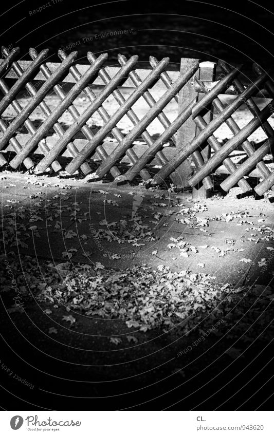 hunter's fence Environment Nature Autumn Climate Beautiful weather Leaf Fence hunting fence Dark Stagnating Border Black & white photo Exterior shot Deserted