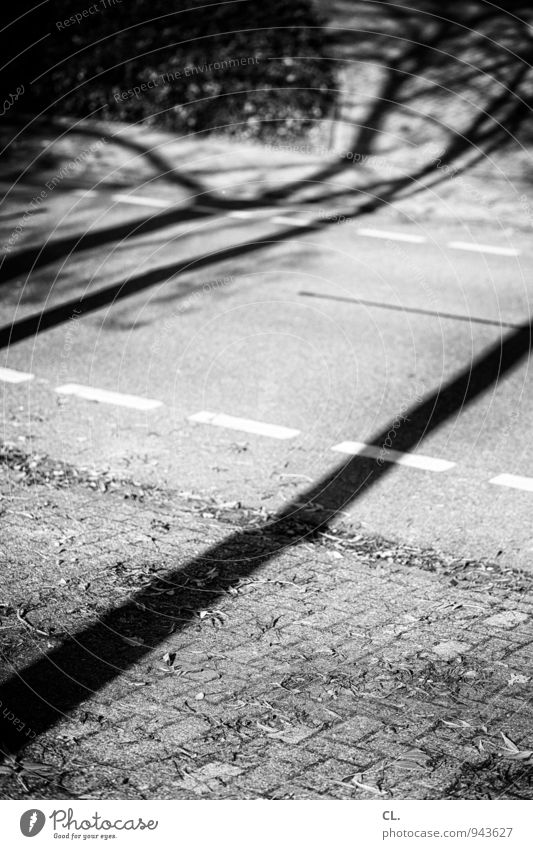 shadow Environment Nature Autumn Beautiful weather Tree Transport Traffic infrastructure Road traffic Street Lanes & trails Cycle path Line Black & white photo