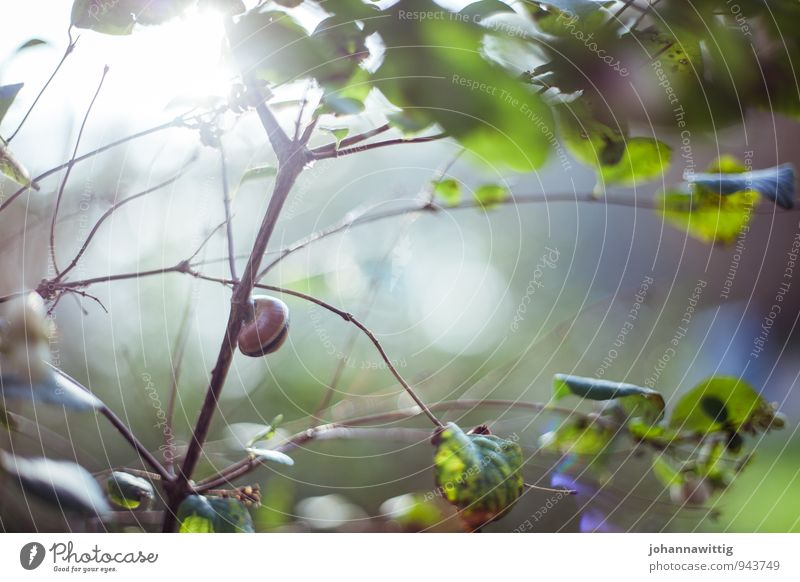 in the snail house Environment Nature Landscape Plant Animal Sun Sunlight Summer Beautiful weather Tree Bushes Leaf Foliage plant Wild plant Snail Running
