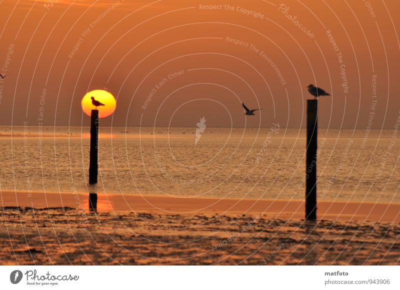 Waiting for an empty seat. Vacation & Travel Beach Ocean Sunrise Sunset Coast North Sea Animal Bird Seagull 3 Sand Wood Water Wooden stake Relaxation To enjoy