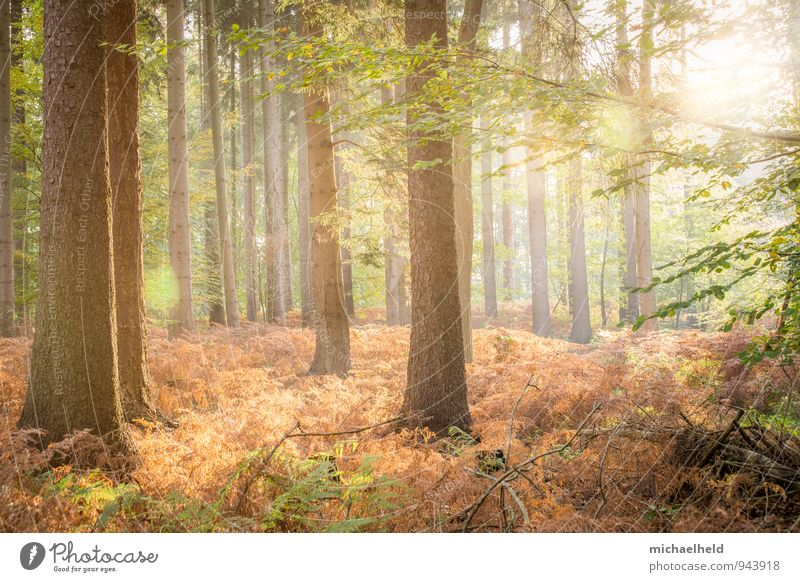 Golden Autumn Landscape Sun Sunrise Sunset Sunlight Tree Fern Forest Think Smiling Love Dream Positive Beautiful Warmth Emotions Warm-heartedness Responsibility