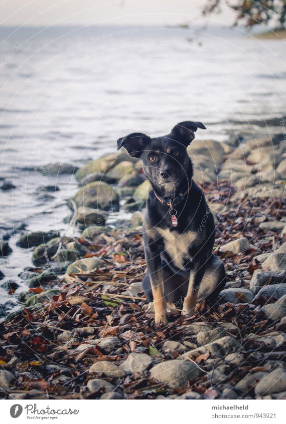 Dog Nature Vacation & Travel Water Landscape Animal Autumn Coast Healthy Lake Friendship Together Waves Contentment Wait Fresh