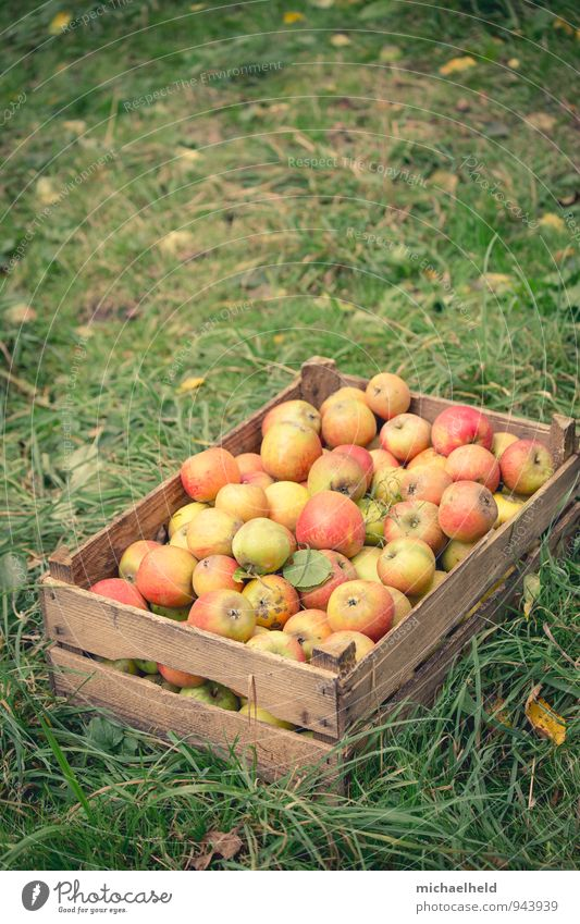 Healthy Eating Natural Fruit Nutrition Apple Organic produce Sustainability Diet Fasting Vegetarian diet Apple harvest