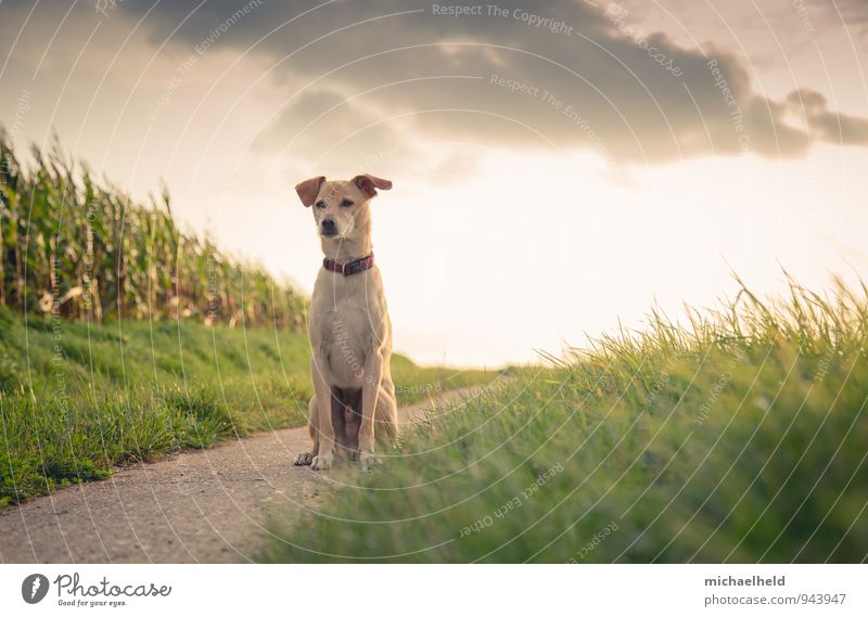 Dog Green Calm Animal Yellow Warmth Lanes & trails Happy Healthy Freedom Moody Friendship Dream Idyll Contentment Gold