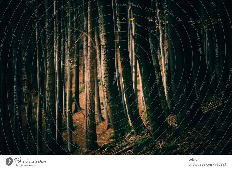 Nature Plant Green Tree Loneliness Landscape Leaf Black Dark Forest Autumn Brown Elegant Gold Esthetic Mysterious