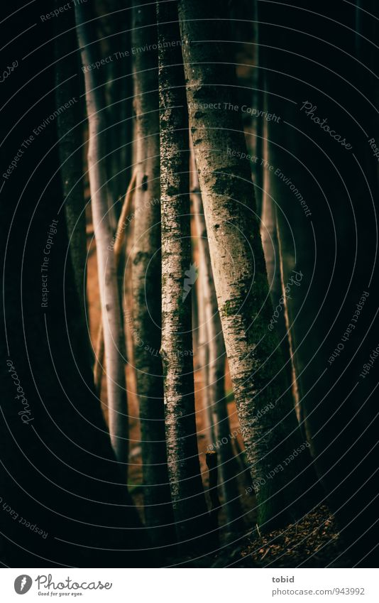 Nature Plant Tree Landscape Black Dark Forest Cold Yellow Warmth Gray Brown Elegant Threat Tree trunk Thin