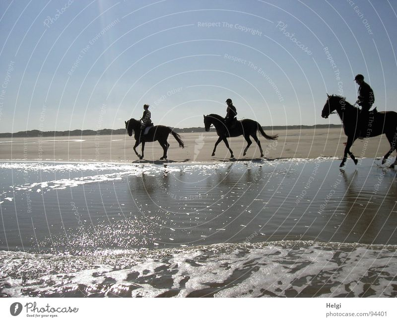 Silhouettes of three riders in sunshine on the beach Subdued colour Exterior shot Copy Space top Day Shadow Reflection Sunlight Back-light Joy Contentment