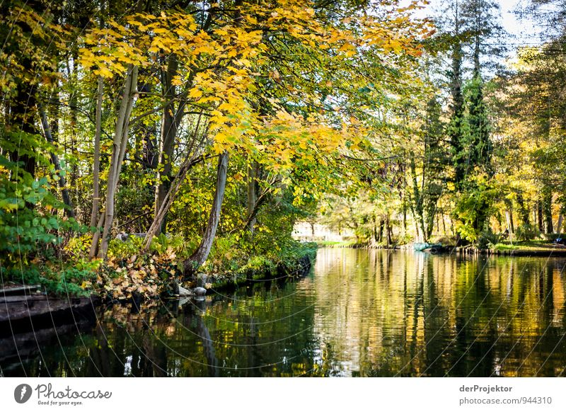 Nature Vacation & Travel Plant Green Water Tree Landscape Joy Environment Yellow Autumn Emotions Leisure and hobbies Tourism Trip Joie de vivre (Vitality)