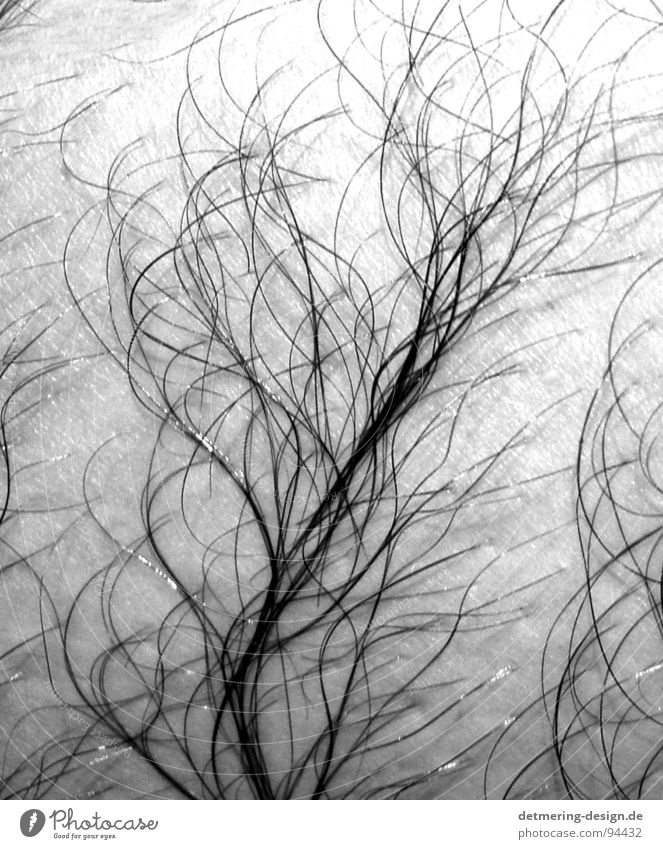 hair tree* Tree Pattern Wet Damp Clean Thin Man Anatomy Appearance Hairy chest Hairy legs Black White Delicate Near Plant Bushes Skin Wrinkles