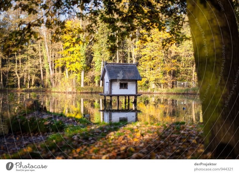 Nature Plant Beautiful Landscape House (Residential Structure) Forest Environment Yellow Autumn Emotions Meadow Garden Lake Moody Park Island