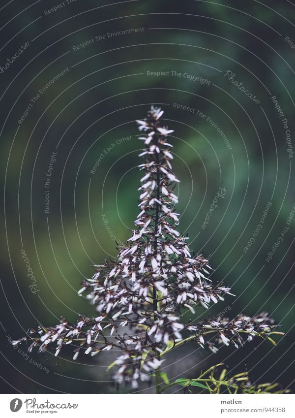Christmas tree Plant Grass Blossom Deserted Blossoming Green Black White Colour photo Subdued colour Exterior shot Copy Space top Day Shallow depth of field