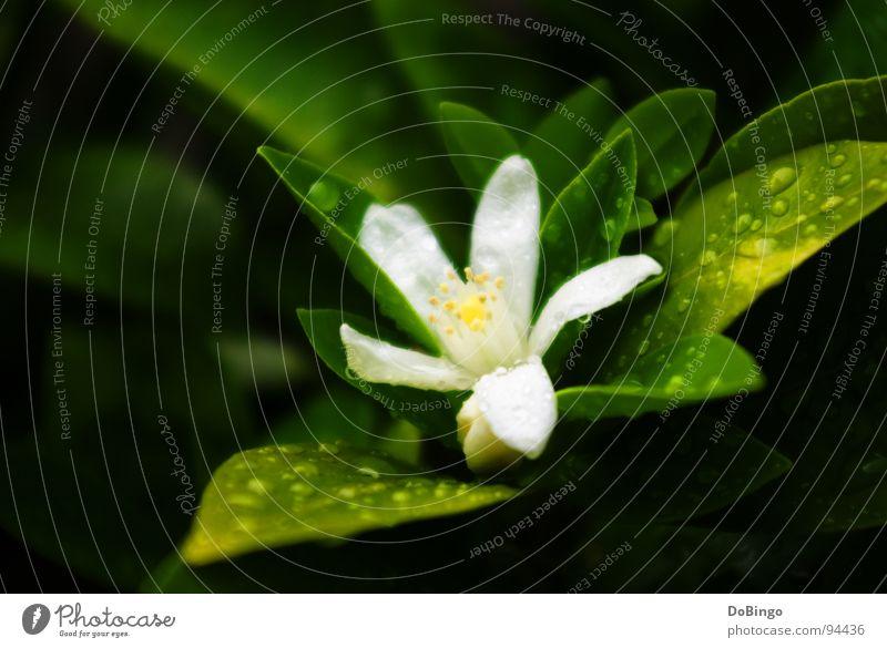 Water White Green Summer Flower Yellow Spring Small Blossom Orange Rain Fear Delicate Virgin forest