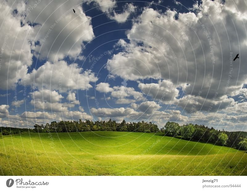 Nature Sky Tree Green Summer Clouds Forest Meadow Grass Air Large Pasture Seasons Green space