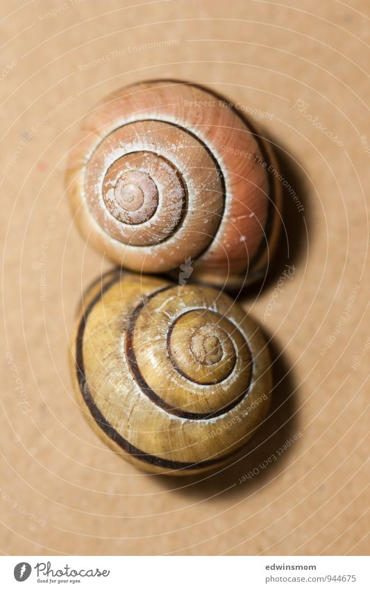 semi-detached houses Animal Snail Snail shell 2 Decoration Touch Authentic Together Small Near Natural Yellow Orange Protection Nature Transience Colour photo