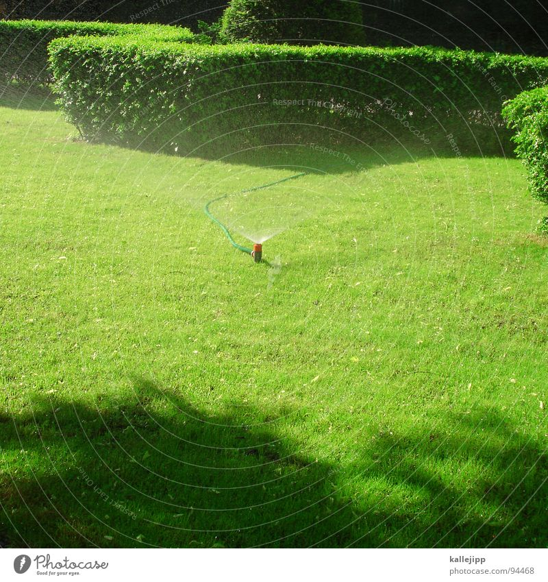 Green Garden Park Germany Lawn Bushes Information Castle Hat Cobblestones Horticulture Blow up Lawn sprinkler