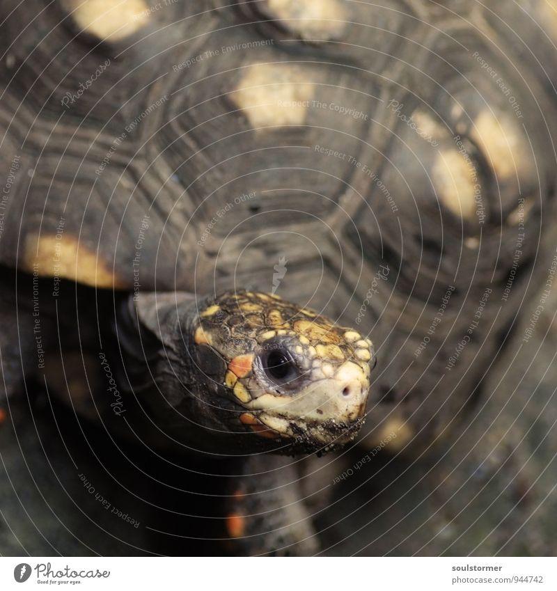 Take it easy... Nature Animal Pet 1 Contentment Joie de vivre (Vitality) Cross processing cross digital-cross False coloured deceleration Turtle Tortoise-shell
