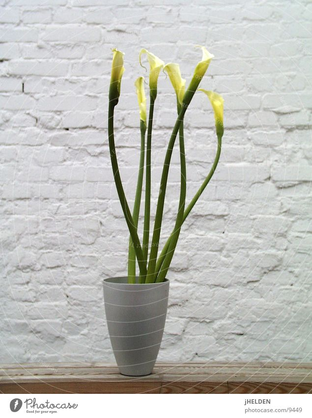 Kallas 04 Joy Summer Plant Spring Flower Blossom Wall (barrier) Wall (building) Wood Jump Cool (slang) Cold White Lily Neutral Minimalistic Zen Vase Wood flour