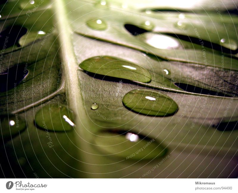 Plant Green Water Leaf Autumn Rain Drops of water Drinking water Wet Dew Damp Vessel Rachis Limp
