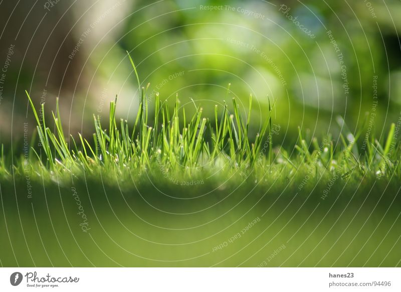 Sun Green Summer Meadow Grass Spring Garden Lawn Depth of field