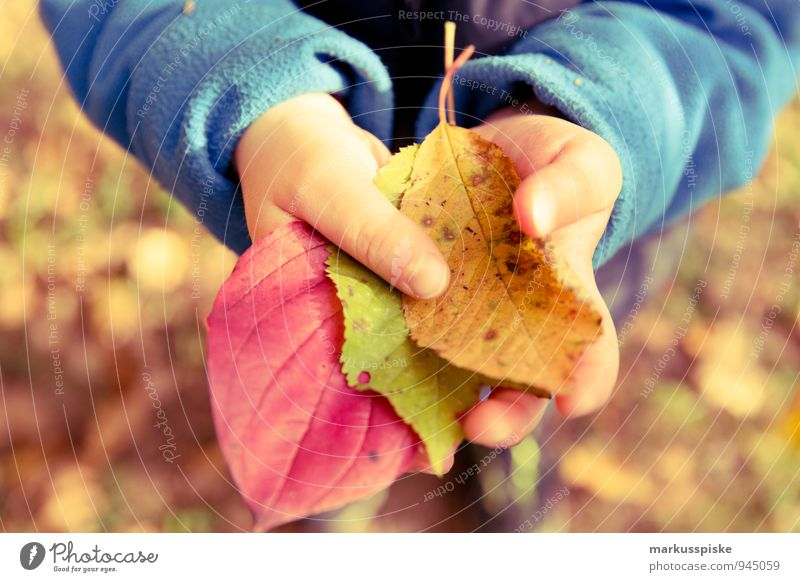Human being Child Hand Leaf Joy Warmth Autumn Playing Happy Masculine Infancy Arm Observe Fingers Study Touch