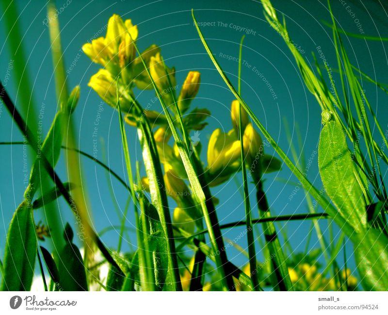 Nature Plant Yellow Jump