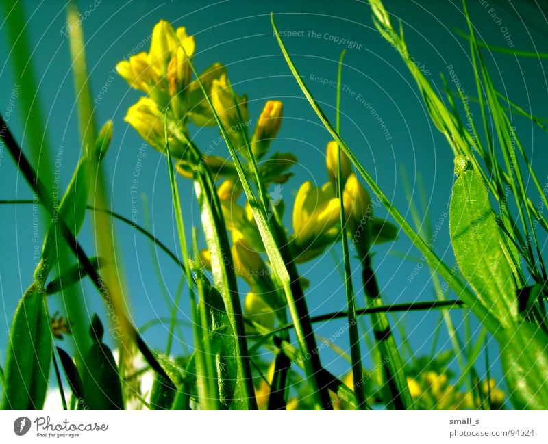 Sunday flowers Yellow Jump Nature Macro (Extreme close-up) Plant blue sun light fun grass grassland meadow pasture plan blossoms