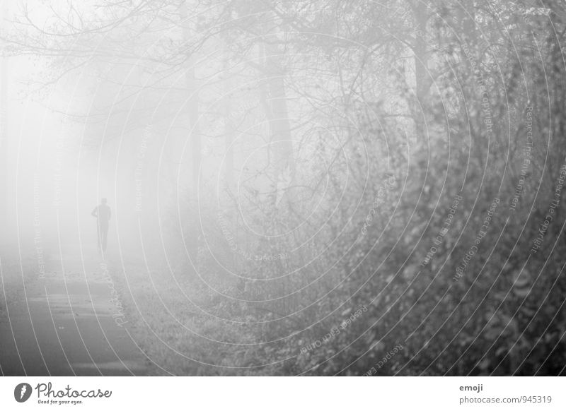 Human being Nature Loneliness Landscape Environment Autumn Gray Fog Individual Bad weather