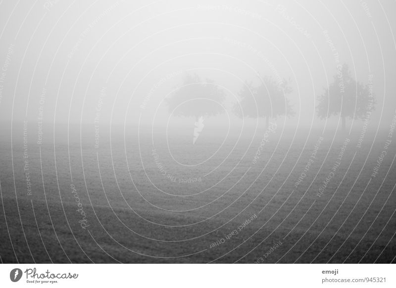 .oO Environment Nature Landscape Autumn Bad weather Fog Tree Meadow Dark Cold 3 Black & white photo Exterior shot Deserted Day Shallow depth of field