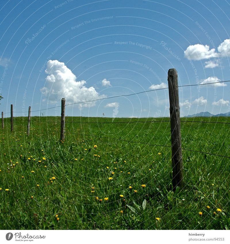 fency grassland Grass Meadow Fence Clouds Flower Blossom Summer Allgäu Hill Sky Barrier Mountain Pasture Nature Landscape Pole countryside